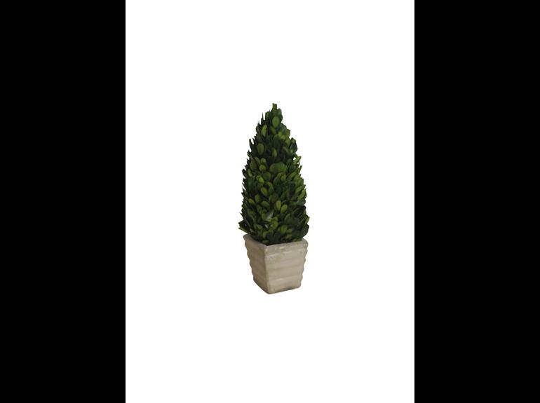 Topiary - Boxwood Cone - 8 x 30 cm