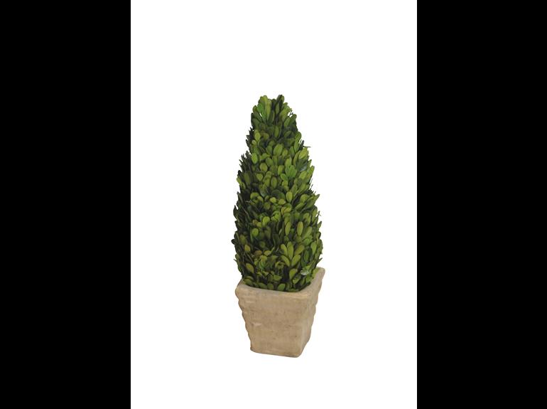 Topiary - Boxwood Cone - 11 x 40 cm