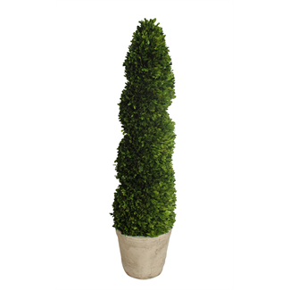 Topiary - Boxwood spiral - 32 x 32 x 130cm