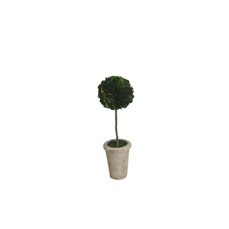 Topiary - Boxwood - 12""