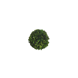 Pomander - boxwood - 15cm