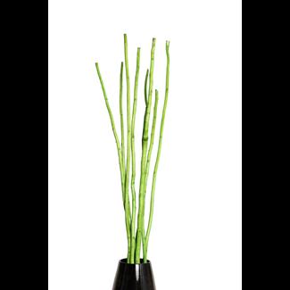 Mitsui Stick (8 stem) Spring Green