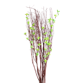 Blooming Blossom Branches - Spring Green