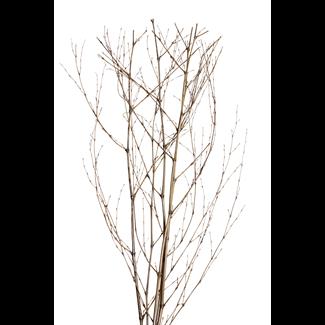 Bamboo Sticks (5 stem) Silver Wash