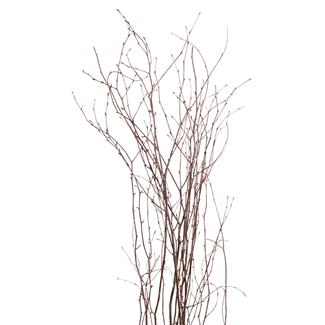 Birch Branches (6 stem) Natural