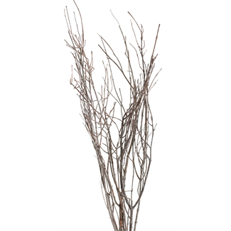 "Twinkly Twigs 36"" (2-3 stem) Frosted"