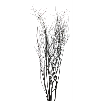 Jay Branches (5-7 stem) Black