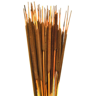 Cattails Pencil (25 pcs) Assorted Case