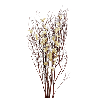 Blooming Blossom Branches - White