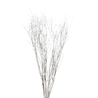 Jay Branches (5-7 stem) White Wash