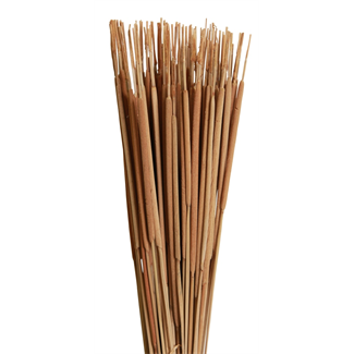 Cattails Pencil (100 pcs) Natural