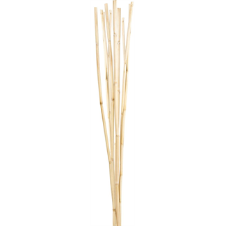 Bamboo Reed (10 stem) Bleached
