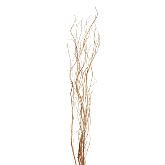 Curly Willow (5 stem) Gold
