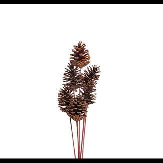 Pine Cones Medium 7-10cm (8 stem) Natural