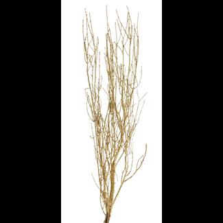 "Twinkly Twigs 36"" (2-3 stem) Gold"