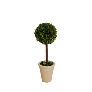 Topiary - Boxwood - 16""