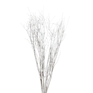Birch branches (5-7 stem) white wash