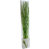 Scented Branches - fresh bouquet - green