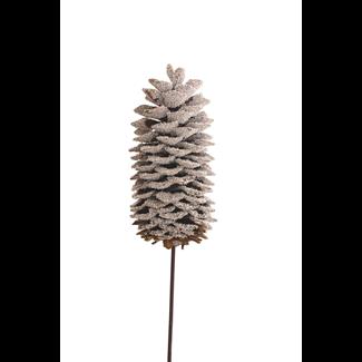 Sugar Pine Cone - Snow