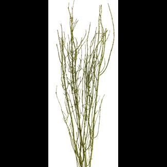 """Twinkly Twigs 36"""" (2-3 stem) Lemon green"""
