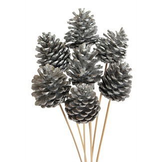 Pine cones - regular (10 stem) Metallic Silver