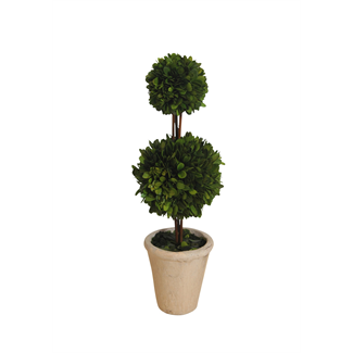 Topiary - Boxwood - 18""