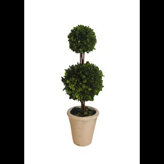 """Topiary - Boxwood - 18"""""""