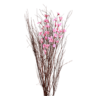 Blooming Blossom Branches - Pink