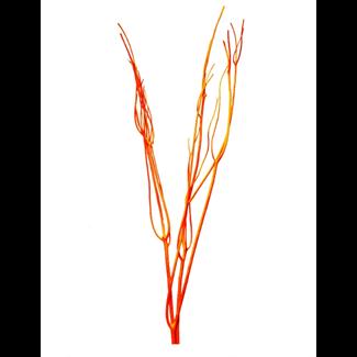 Mitsumata (3 pcs) Orange