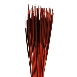 Cattails Pencil (100 pcs) Brown