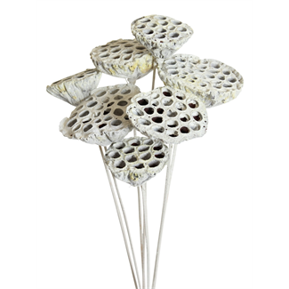 Lotus pods (7 stem) White glitter