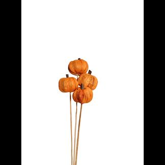 Pumpkins (8 stem) Orange