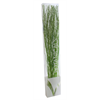 Scented Branches - Pine - Green