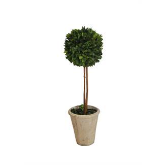 Topiary - Boxwood - 20""