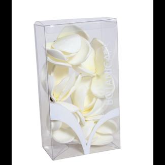 """Magnolia in Box 9"""" (6 pcs)"""