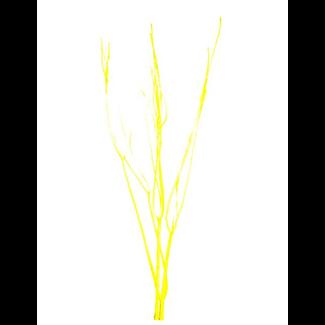 Mitsumata (3 pcs) Yellow
