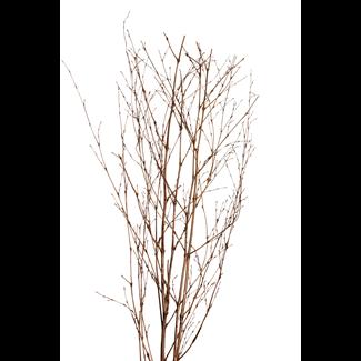 Bamboo Sticks (5 stem) Copper Wash