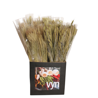 Displayer - Grasses & Grains (50 Pack) Natural