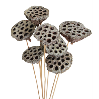 Lotus Pods (3 pcs) Frosted
