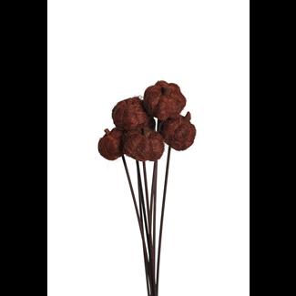 Fiber Pumpkins (8 stem) Brown
