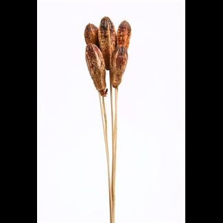 Mahogany Pods (5 pcs) Natural