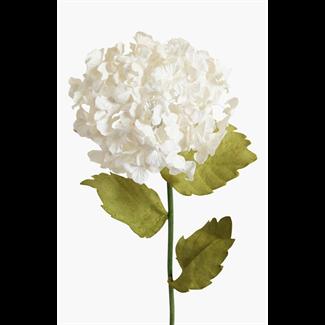 Paper Hydrangea - Natural White