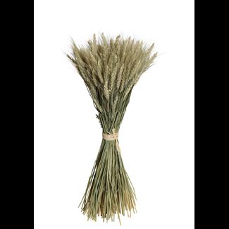 Bearded Tarwe Sheaf - Natural