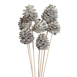 Pine cones Regular (10 stem) Frosted