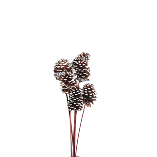 Pine Cones Medium 7-10cm (8 stem) White Tipped
