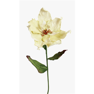 Paper Poinsettia- White