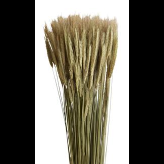 Rye (6 oz) Natural