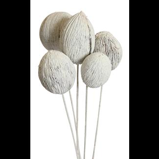 Mintola balls (6 stem) White glitter