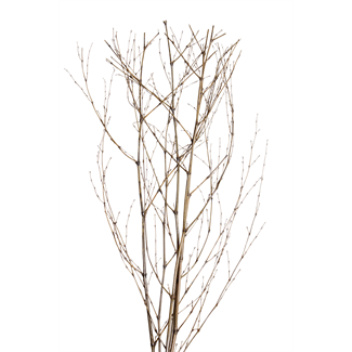 Bamboo Sticks (5 stem) Silver Wash