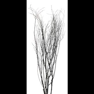 Jay Branches (5-7 stem) Black